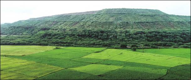 Agriculture fields getting benefitted by mine water near a SCCL mine